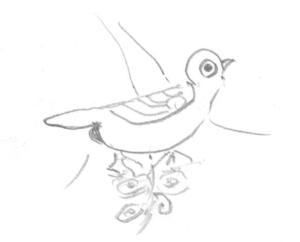 知らない鳥